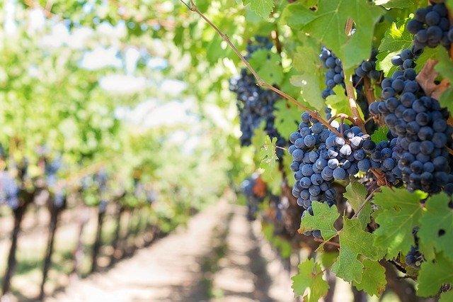 מבצעי יין